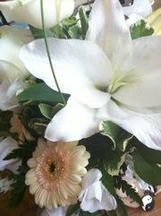 tao flowers x